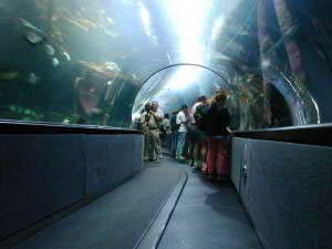Aquarium of the Bay, Pier 39, Fishermans Wharf, San Francisco, Kalifornien